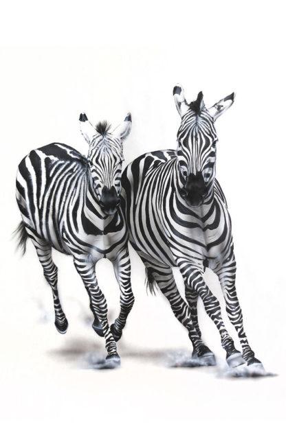 zebra painting NelumboArt