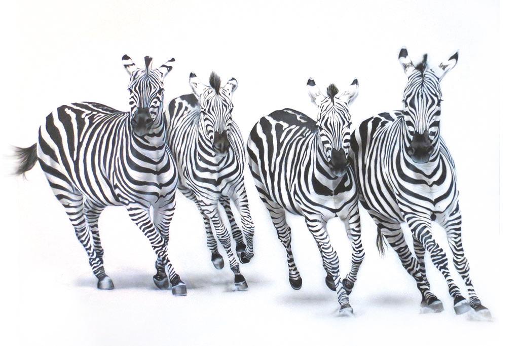 zebras in zoo painting NelumboArt