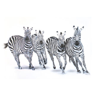zebras in zoo painting NelumboArt