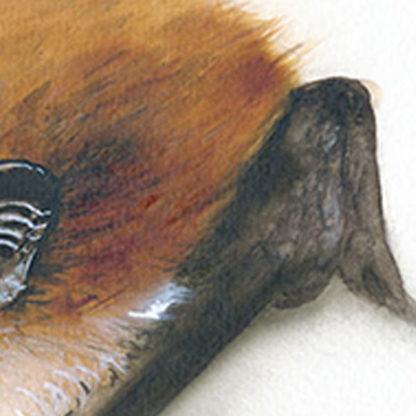 Alpenfledermaus