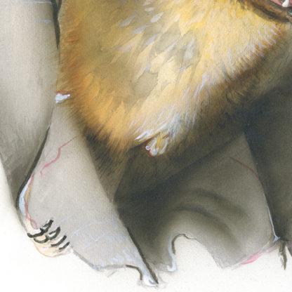 Breitflügelfledermaus