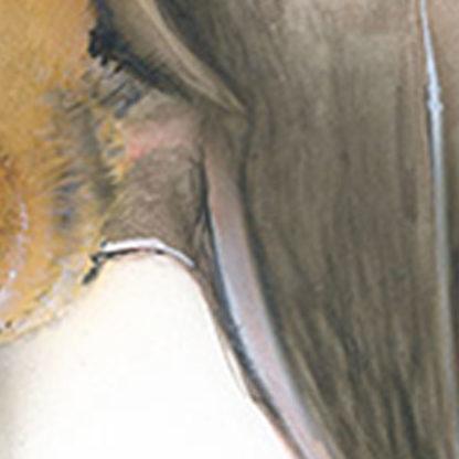 Weißrandfledermaus